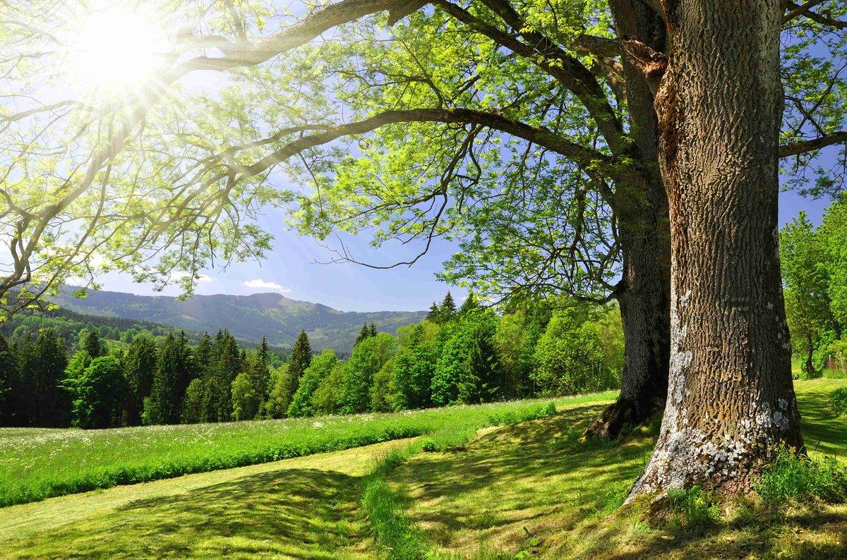 Сайта, деревья фото и открытки