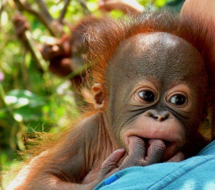 Пятачком, открытки смешные обезьянки
