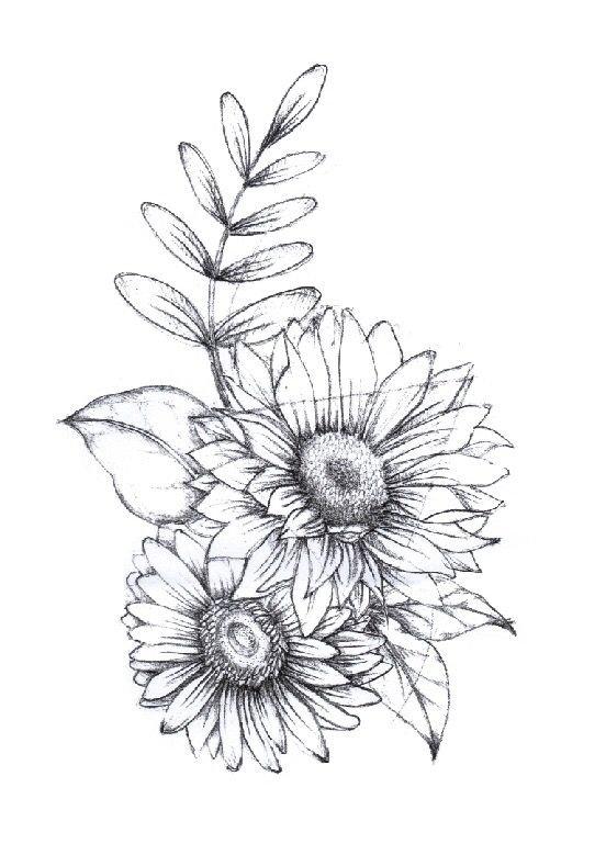 пищевой цветы герберы рисунки карандашом музея