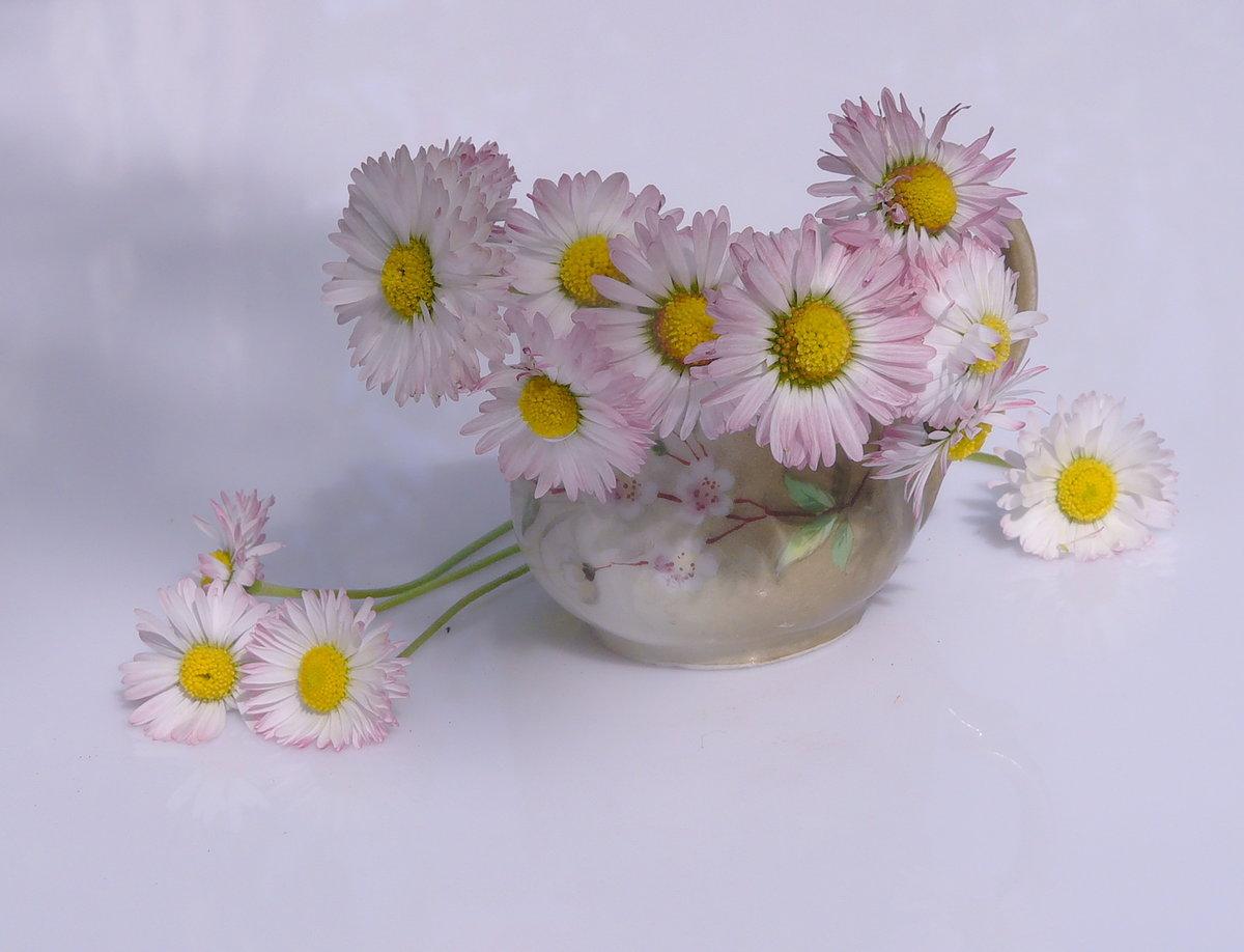 Марта, цветы маргаритки картинки букет