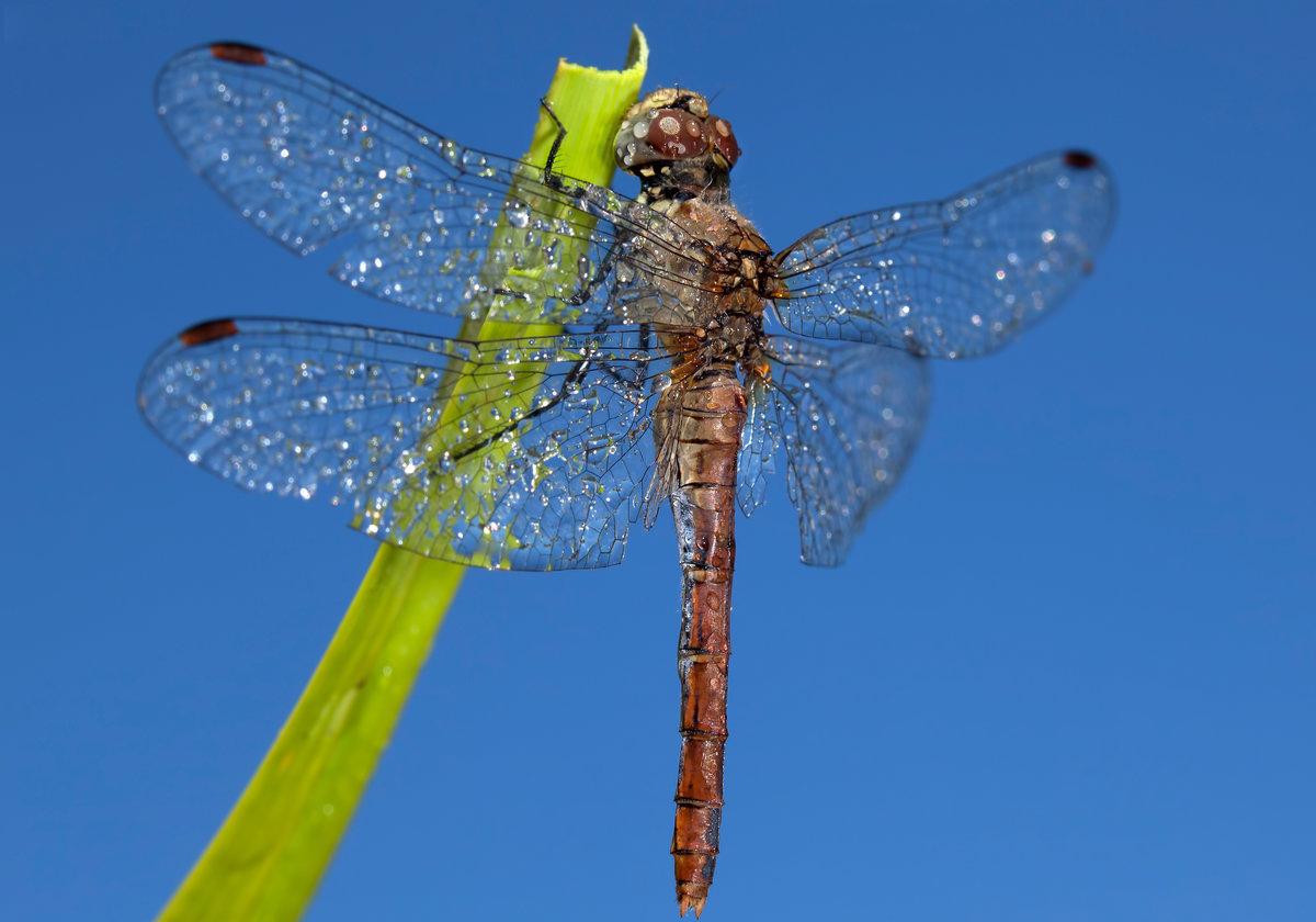 насекомое стрекоза картинки подчеркнул
