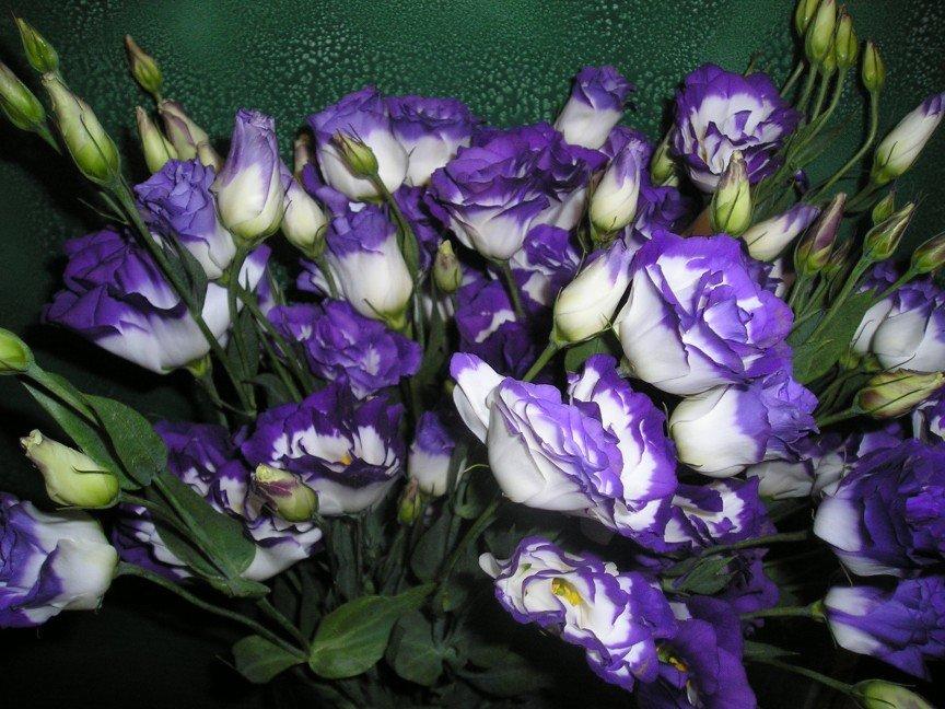 Цветы, цветы для букеты как выглядят и их названия