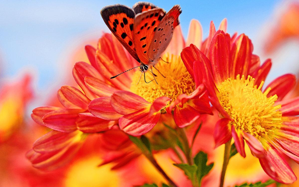Бабочки открытки фото, днем рождества