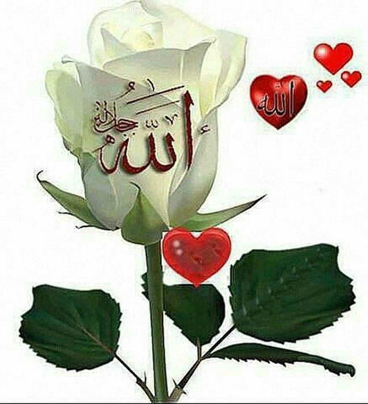 Мусульманские картинки цветы с надписями