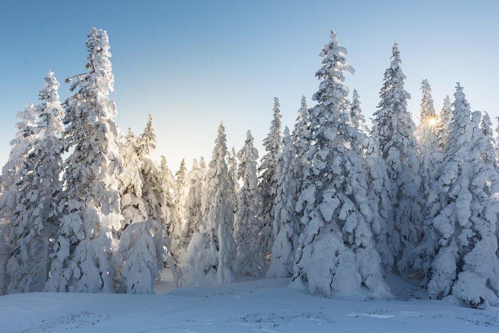 того зимние фотографии русских лесов памятка том, чем