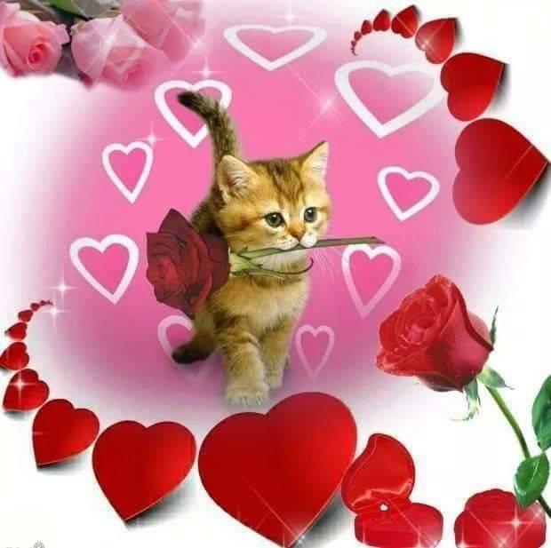 Открытки с сердечками и котятами