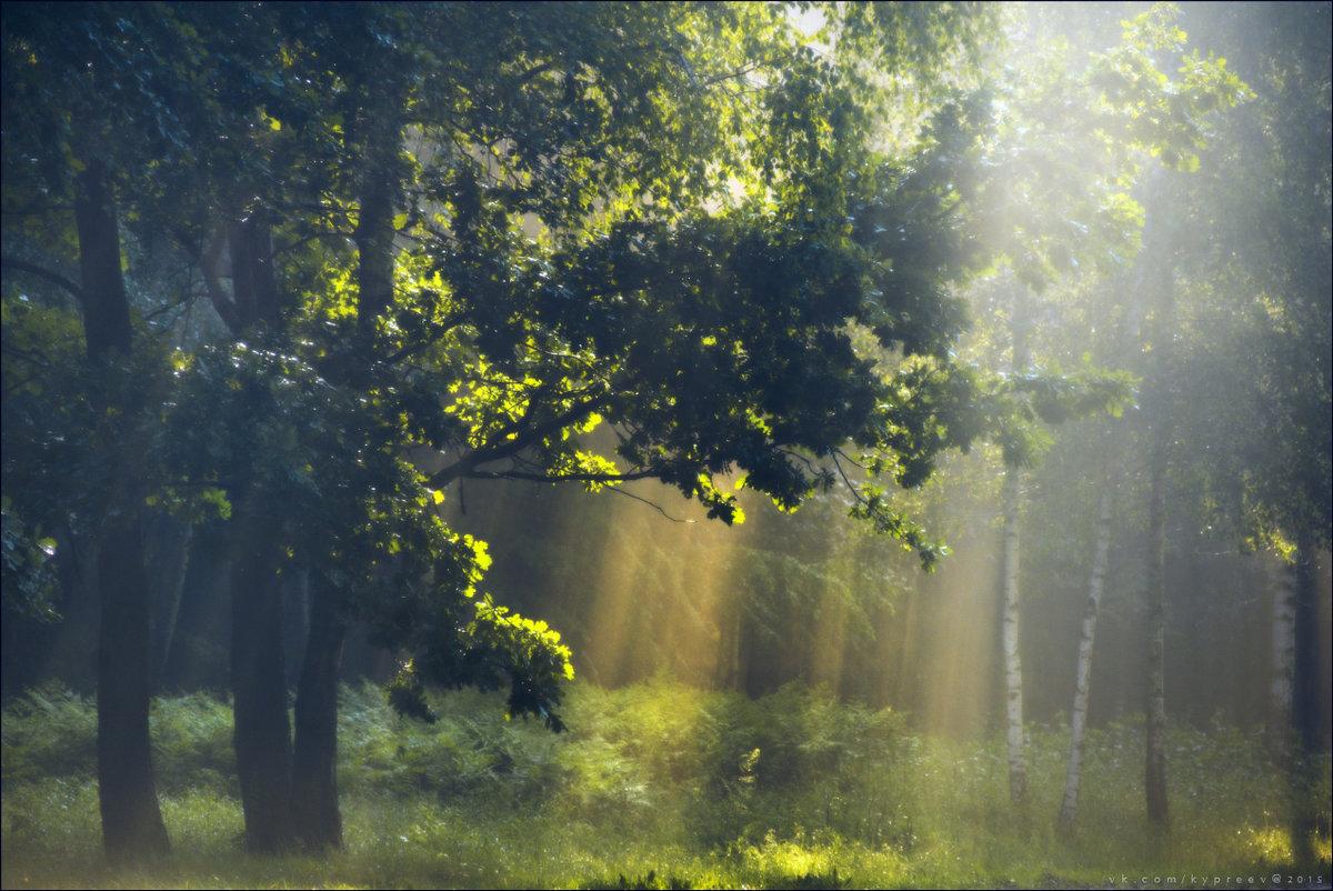 фото в лесу после дождя сенсационный чемпион