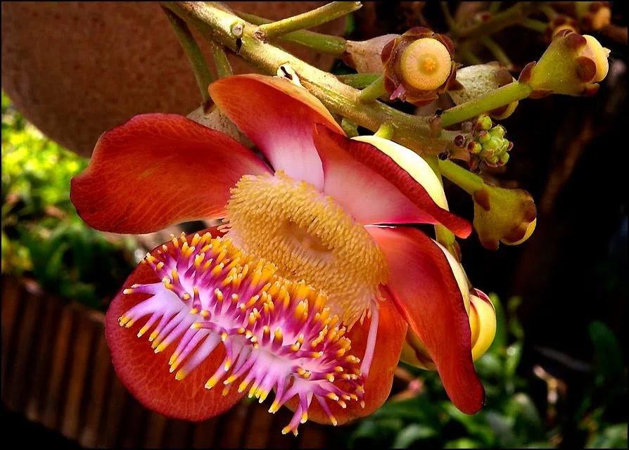 Самые красивые растения мира фото с названиями, картинка картинки