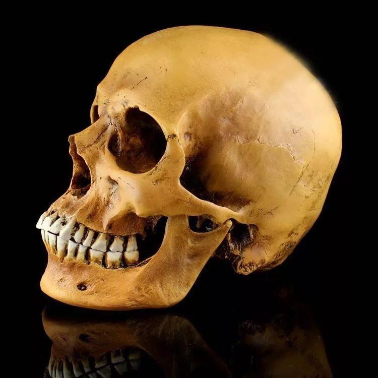 картинки черепа со всех сторон пределами маленьких