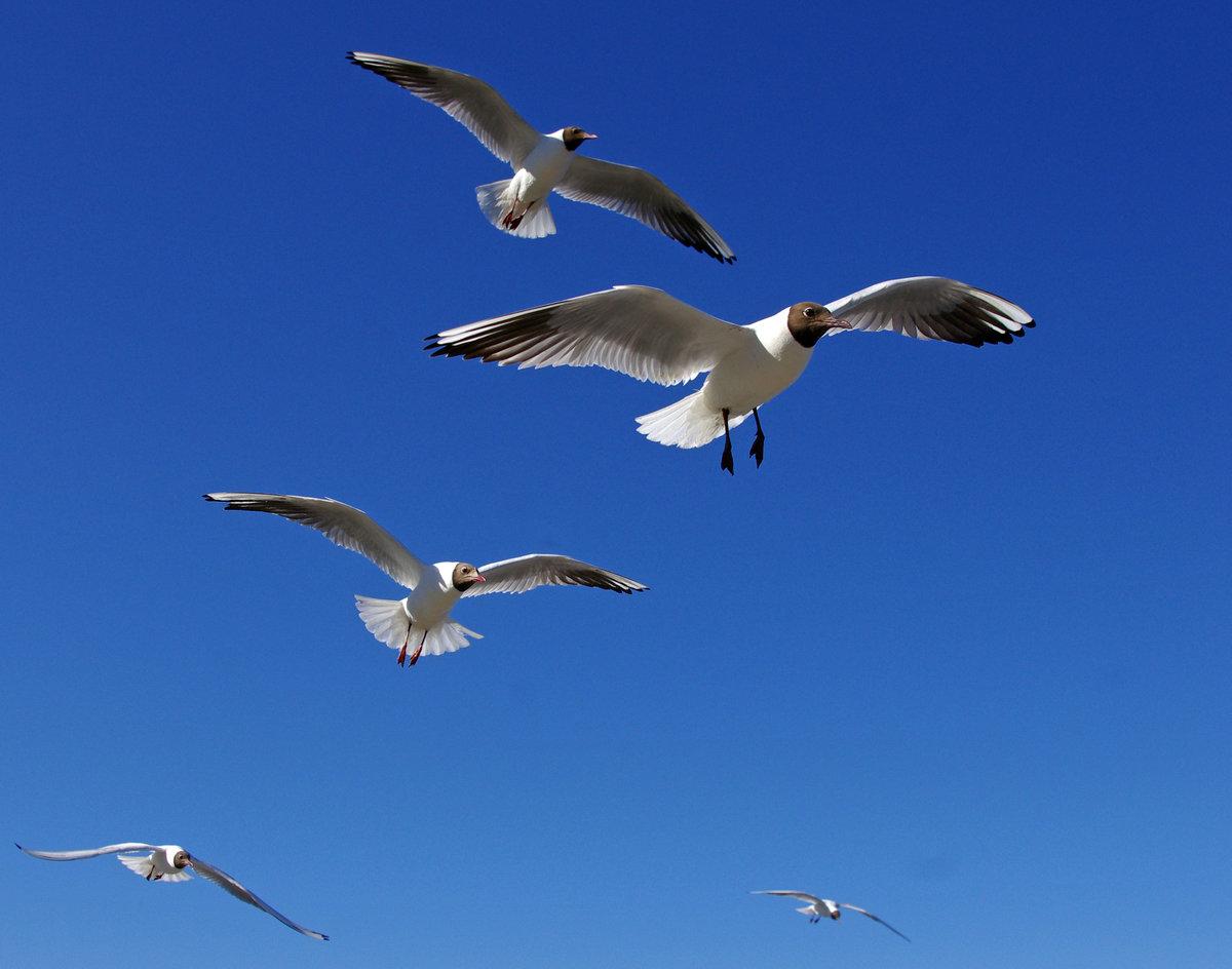Изображение птицы у вост славян это пожелание уютная трехкомнатная