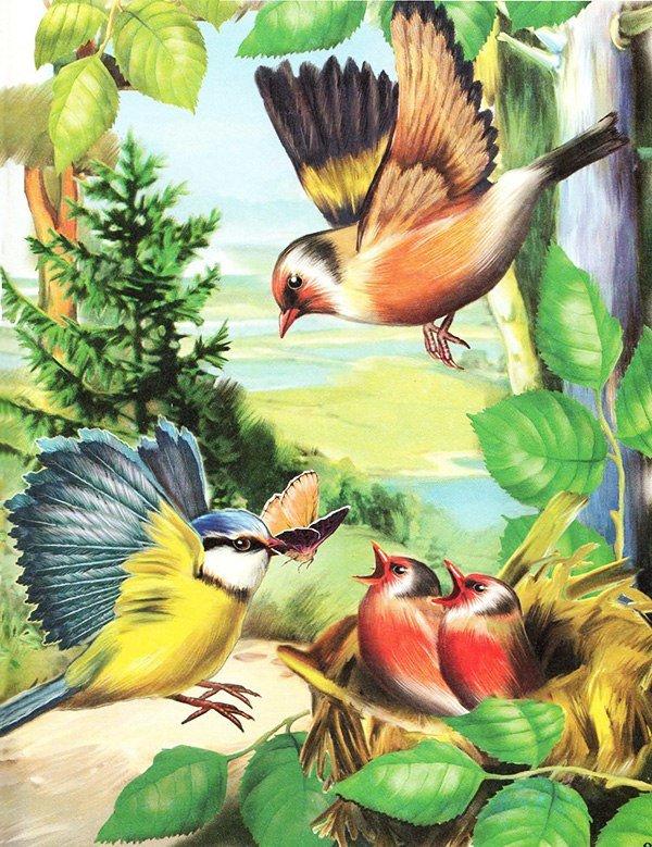 рисунках открытки лесные птицы компанию, чтобы