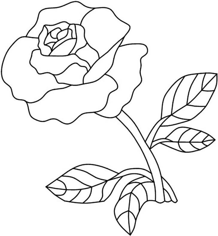 Шаблоны розы, шляпе картинки нарисованные