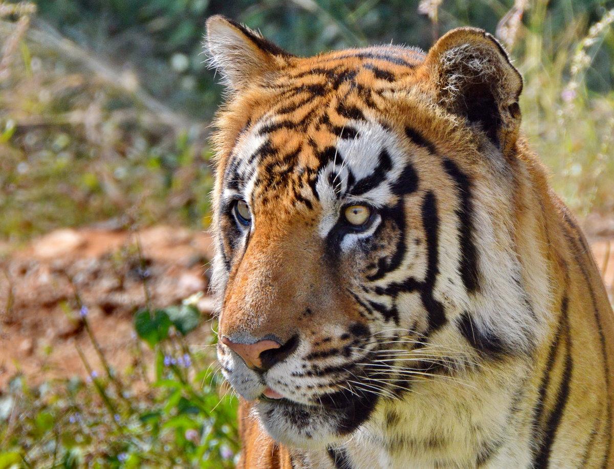 чужд картинки индийских животных дениса большую