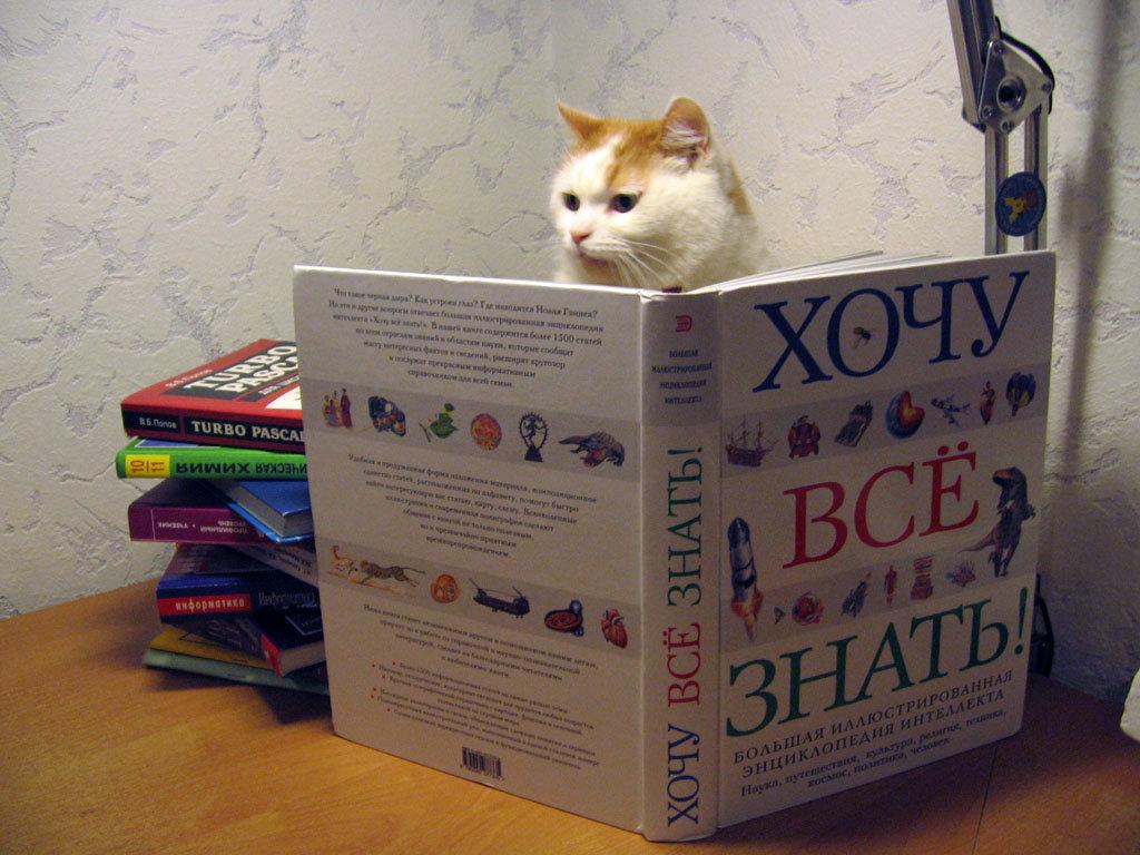 Прикольных, чтение книг картинки смешные