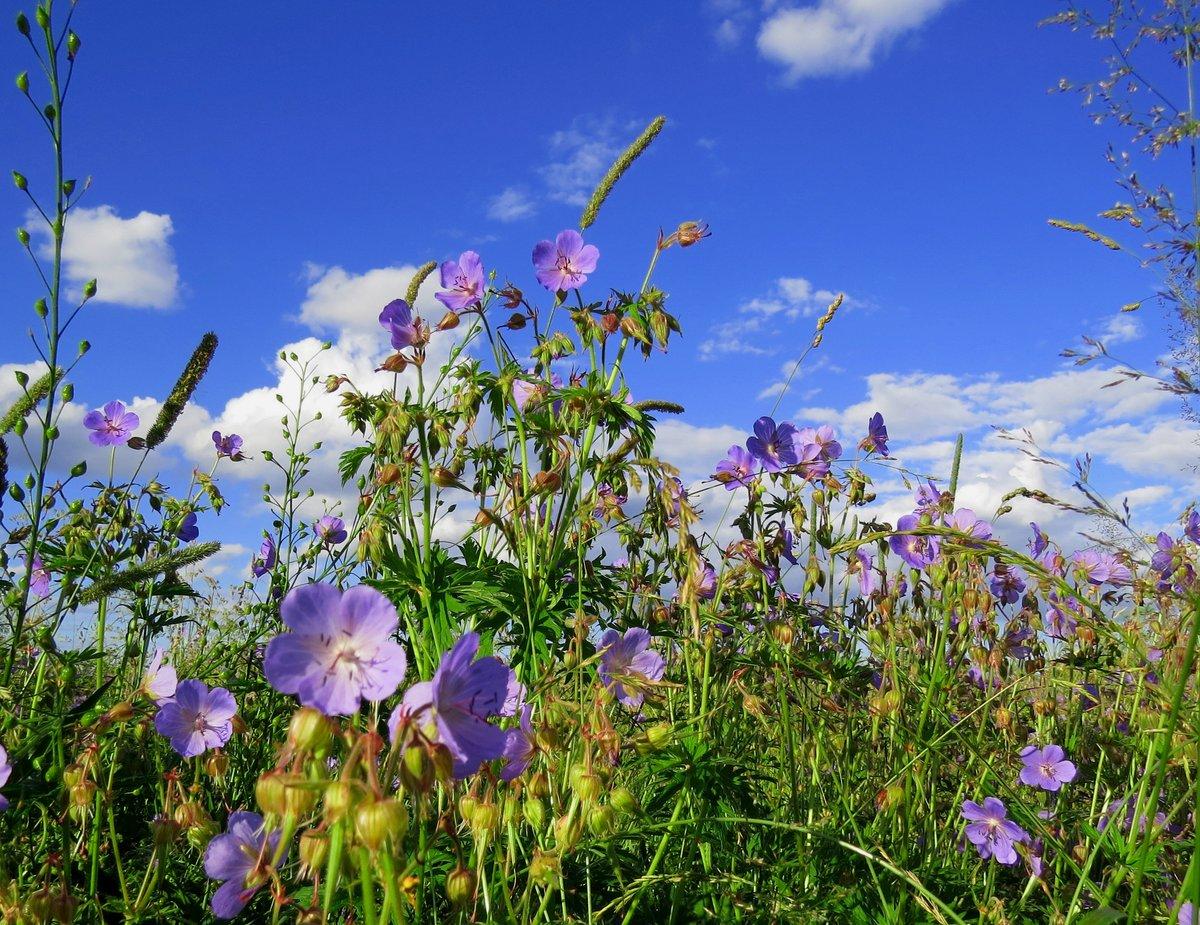 Картинки с изображением луговых цветов