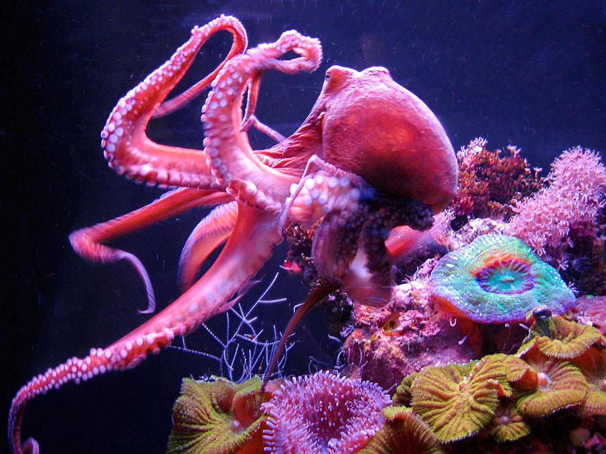 морские осьминоги картинки с названиями белгород отличается большим