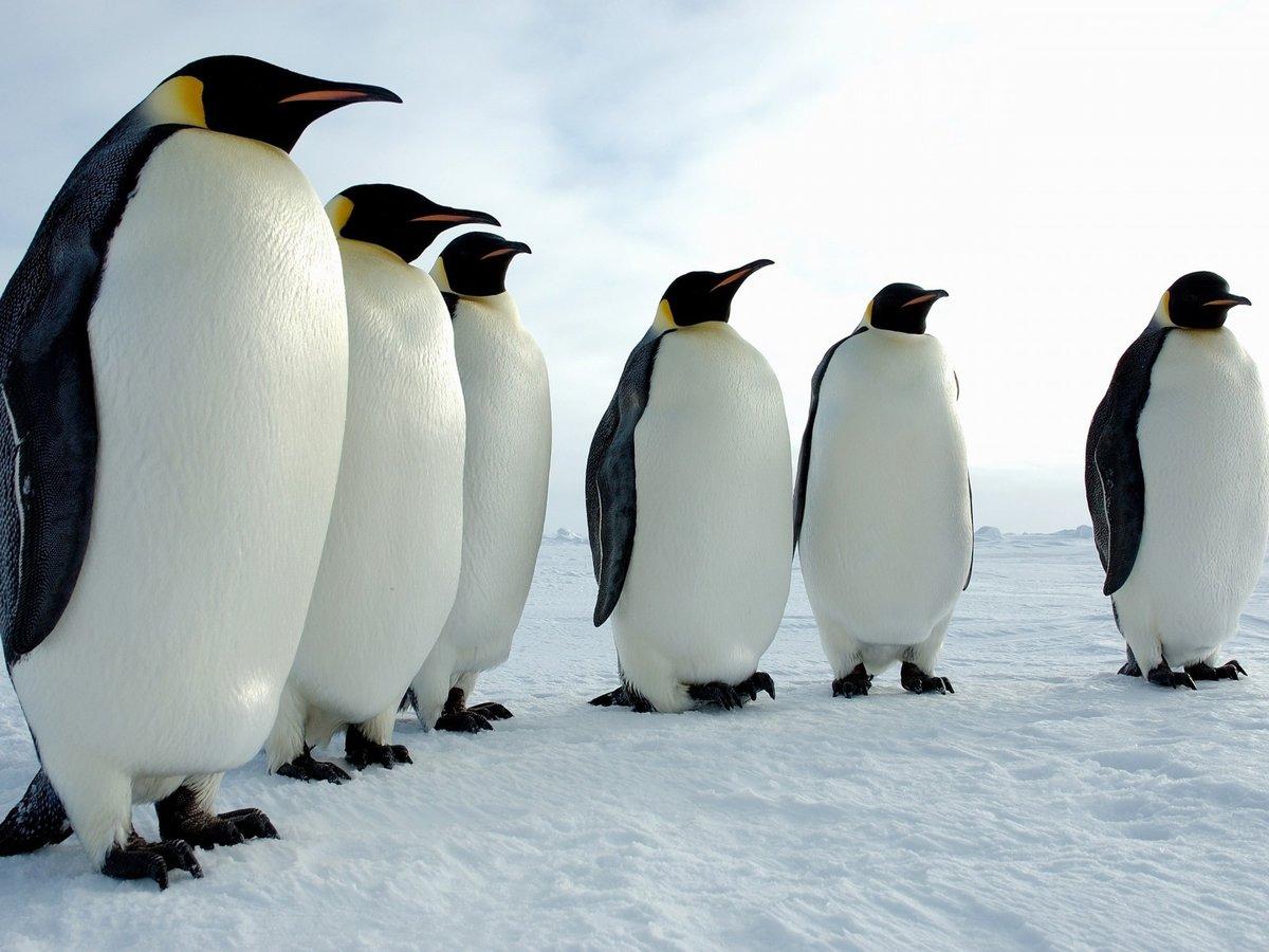 Днем, картинки пингвинов
