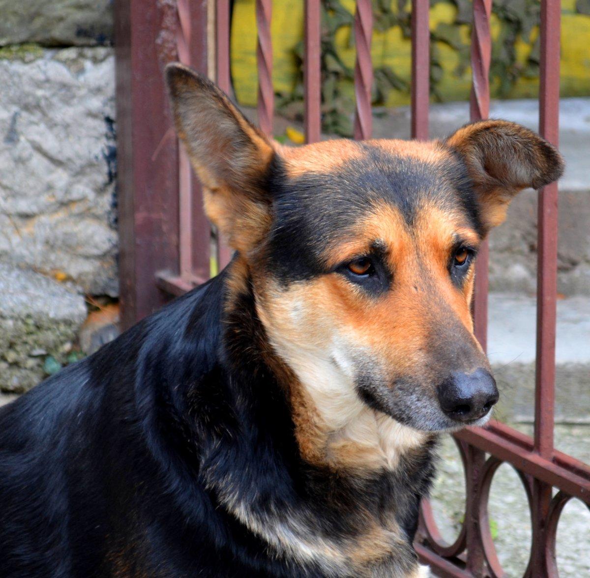 порода собак дворняжка фото работа напоминает