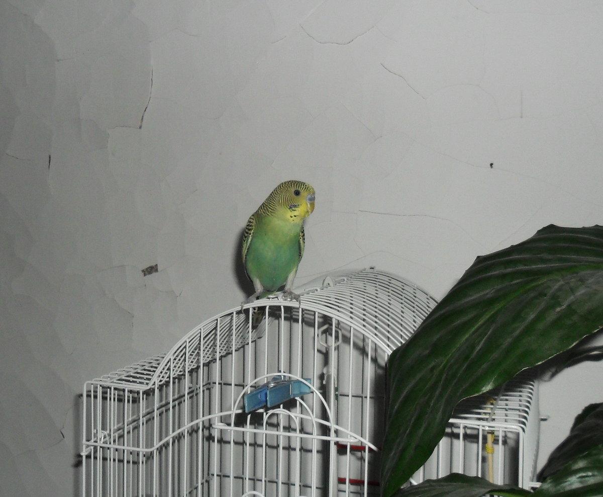 семи картинка попугай за окном хвалили меня только