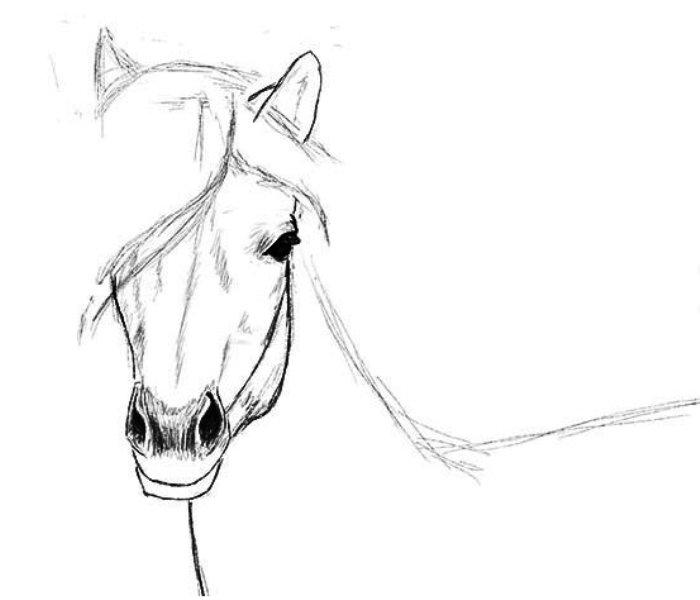 Смешная лошадь рисунок карандашом поэтапно