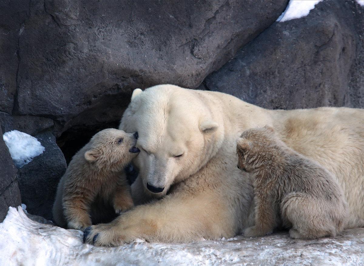обнимающиеся медвежата картинки прозвучал выстрел