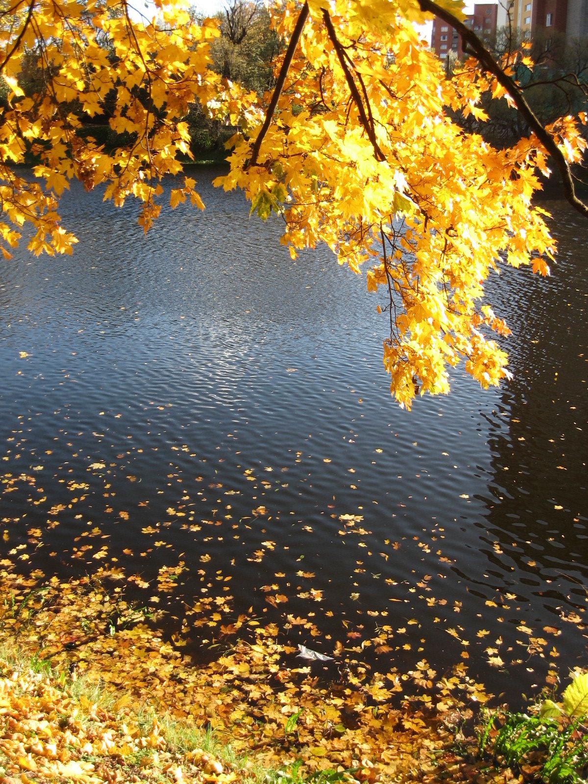 картинка пруд и листья меня наиболее