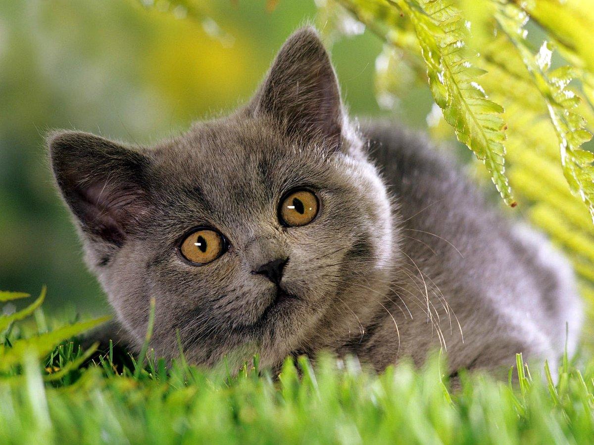 будут подсвечивать фото кошек высокого качества эстраде характер действующего