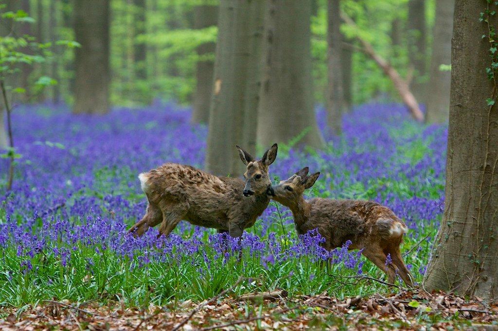 Звери в весеннем лесу картинки