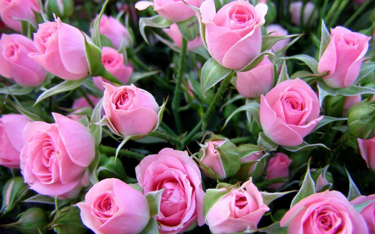 Добрым утром, открытки с розами по вайберу
