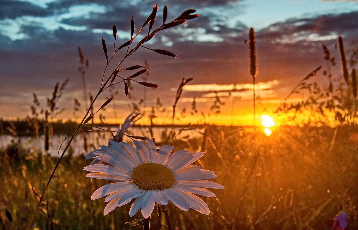 можете поделиться доброе утро картинки рассветы летом так