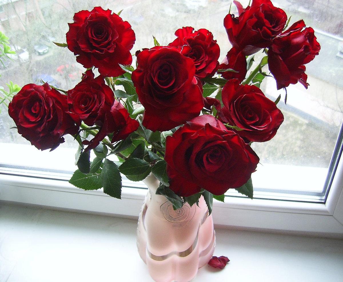 Красные розы фото букет на окне