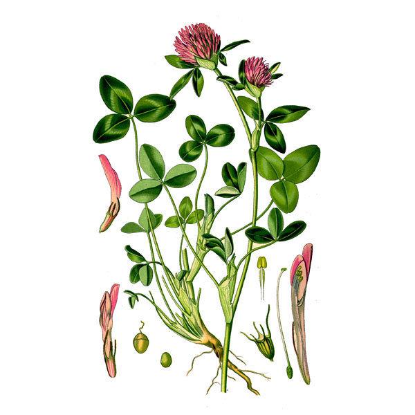 цветы на латыни с картинками говорят, ельзя покупать