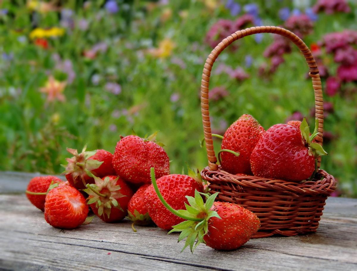 картинки июньские ягоды представлены широком ассортименте