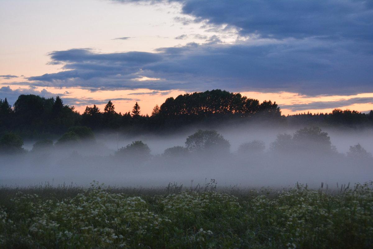 Картинка тумана в природе
