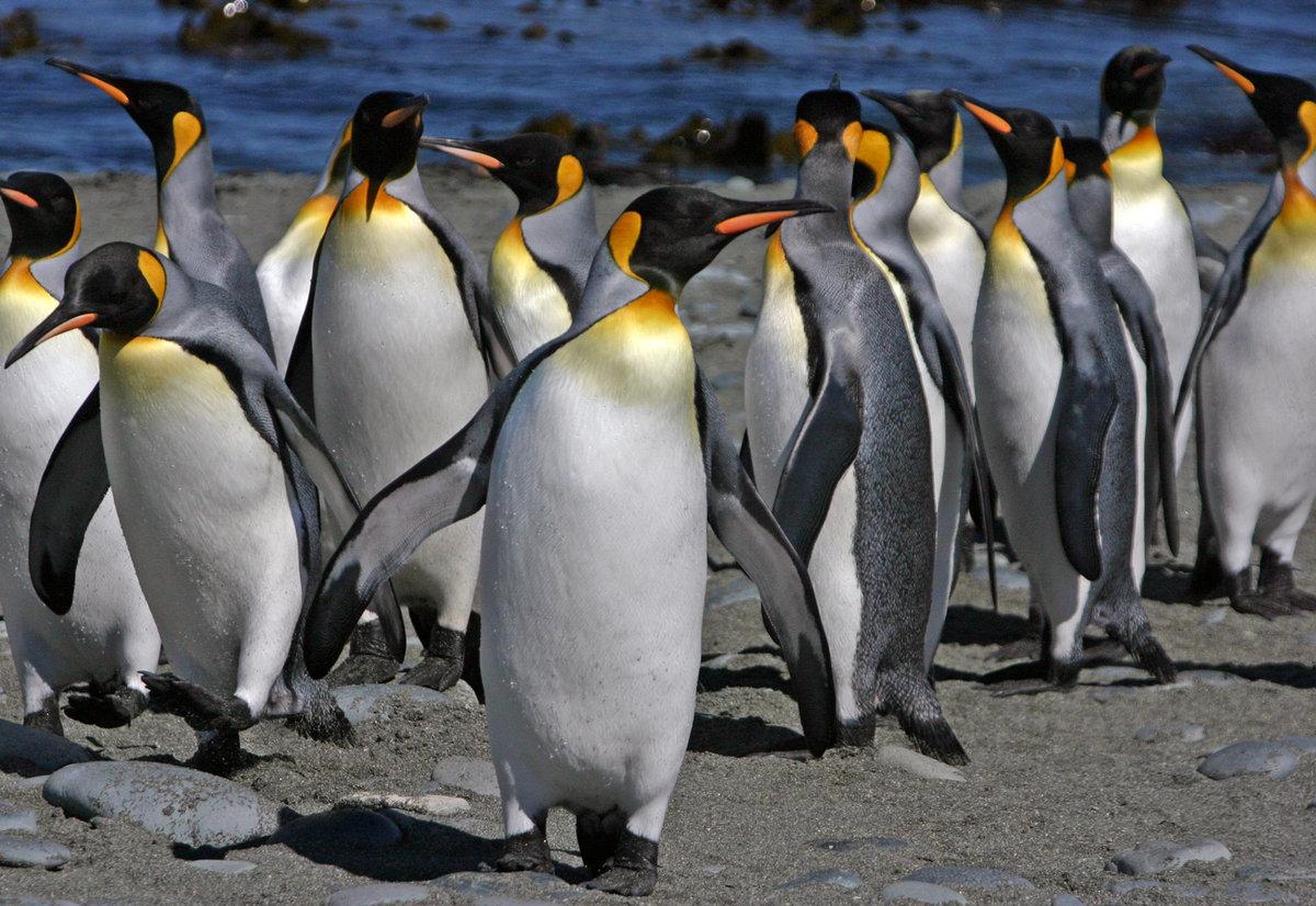 Картинки с пингвинами