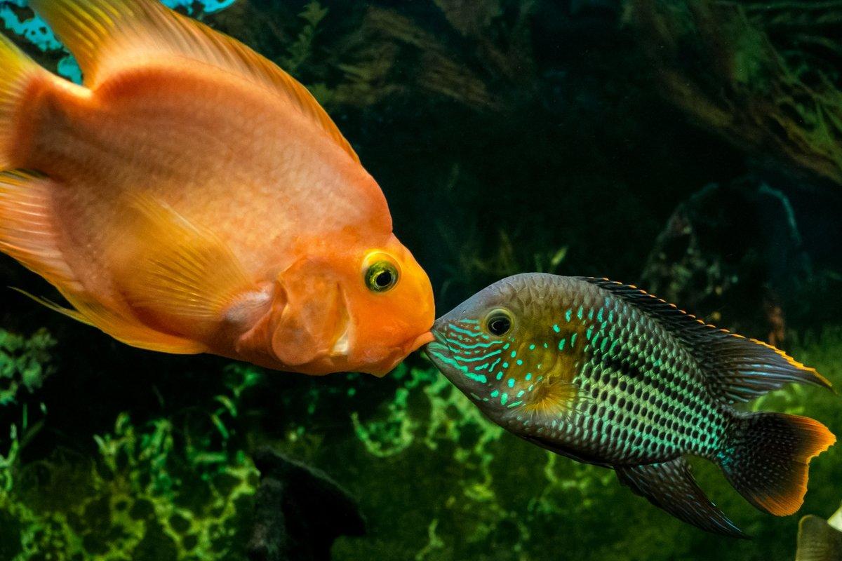 дня картинка рыба поцелуй связи