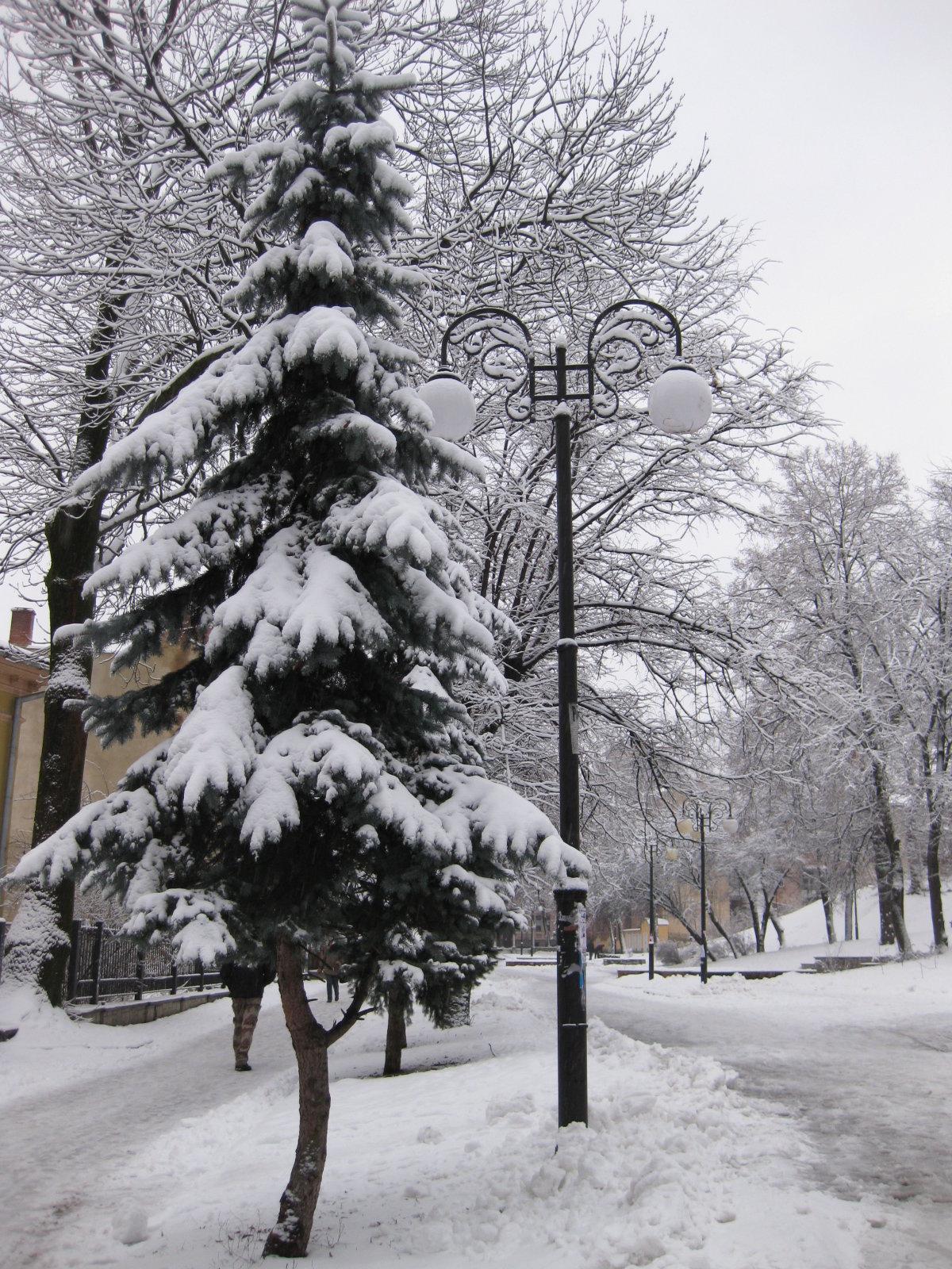 Картинка с елками на улице в снегу