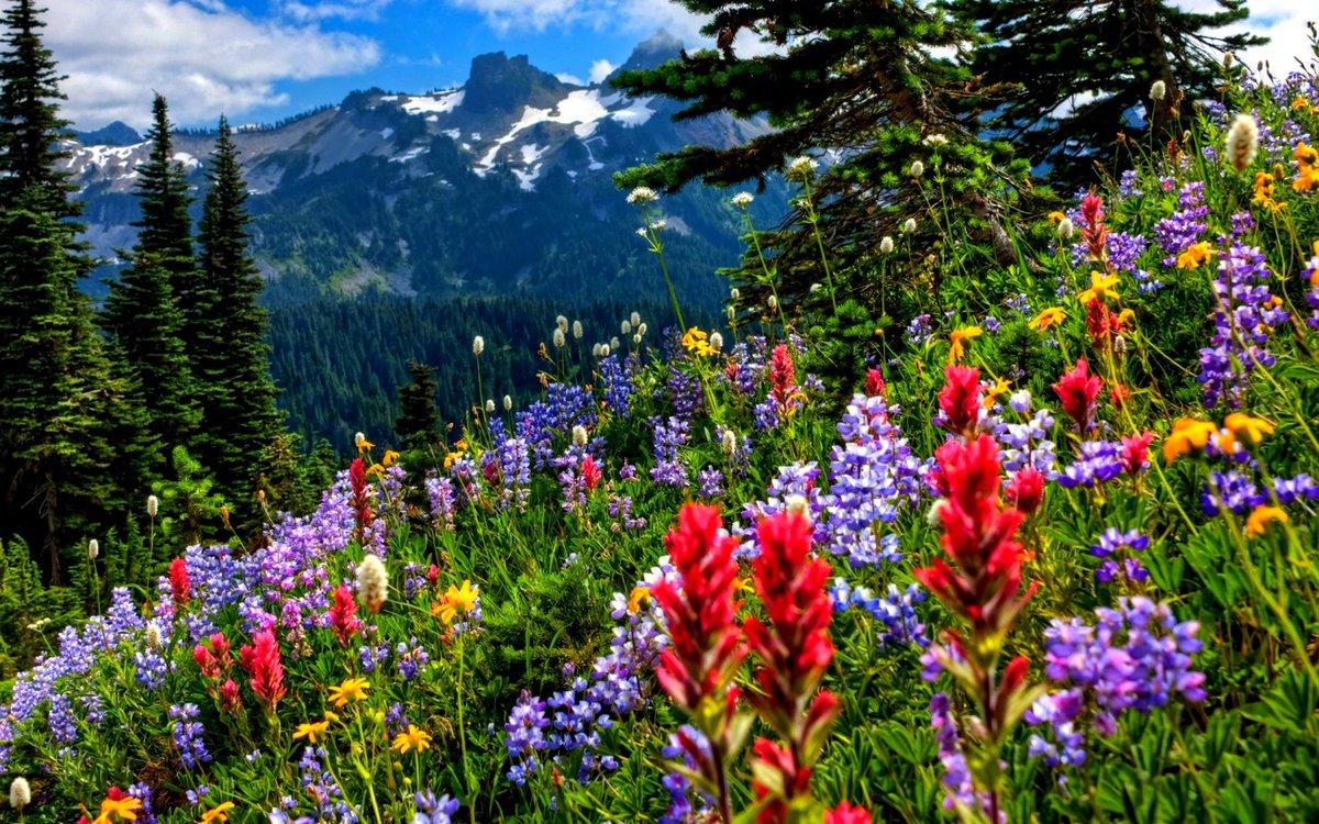 новые красивые картинки природа такой важный