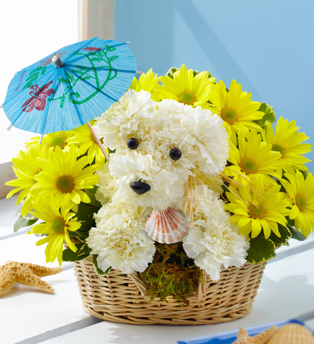 Прикольные цветы букеты картинки, смешные картинки про