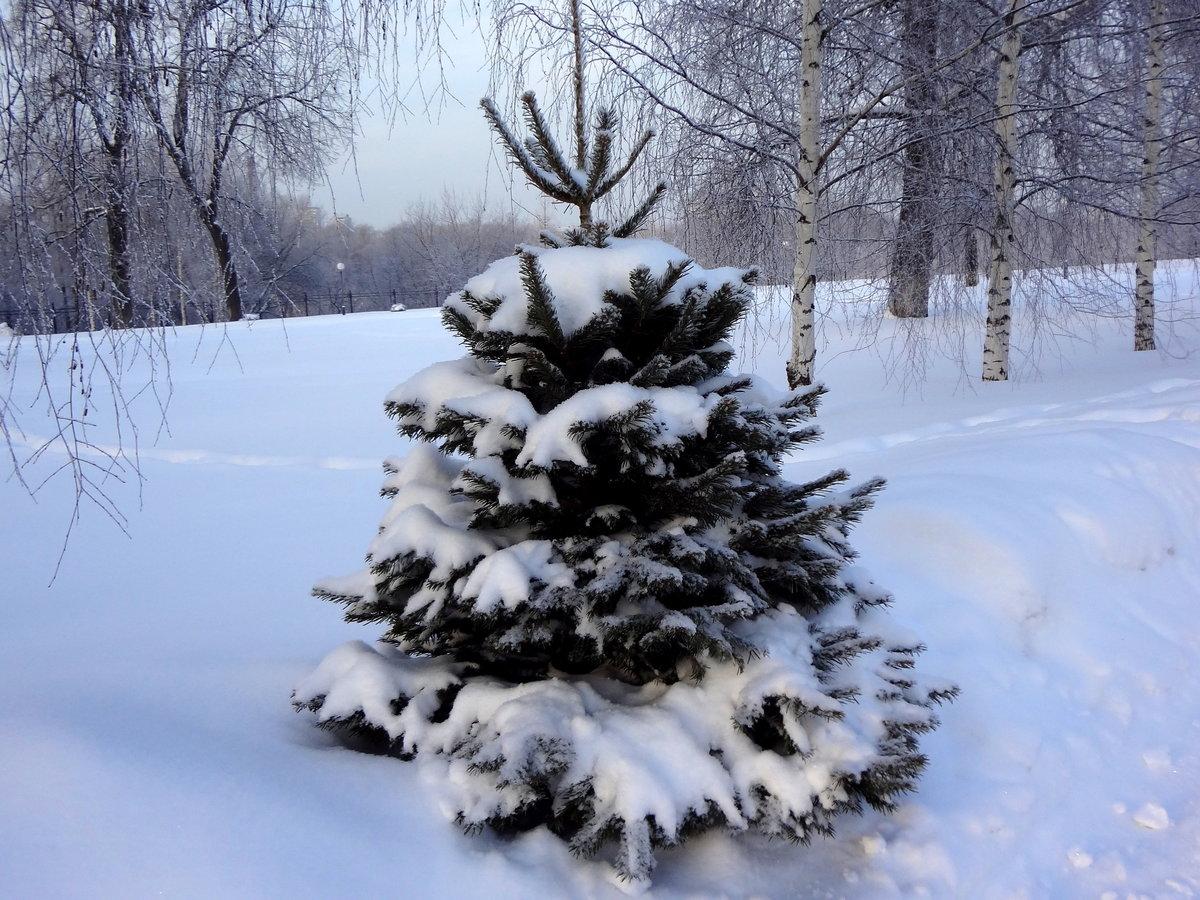 Зимняя елка картинка