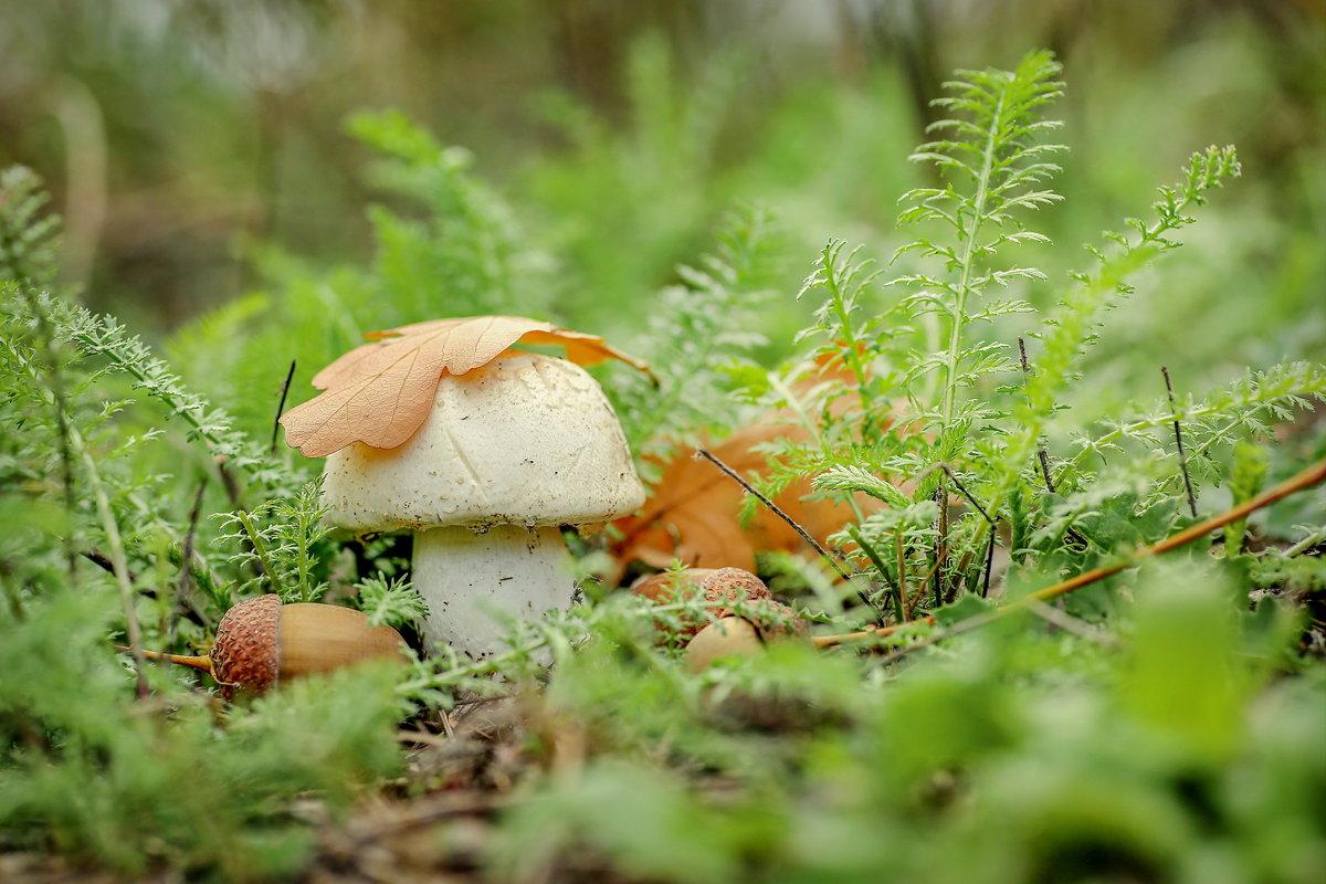 картинка грибов и желудей ухажеры только боготворили