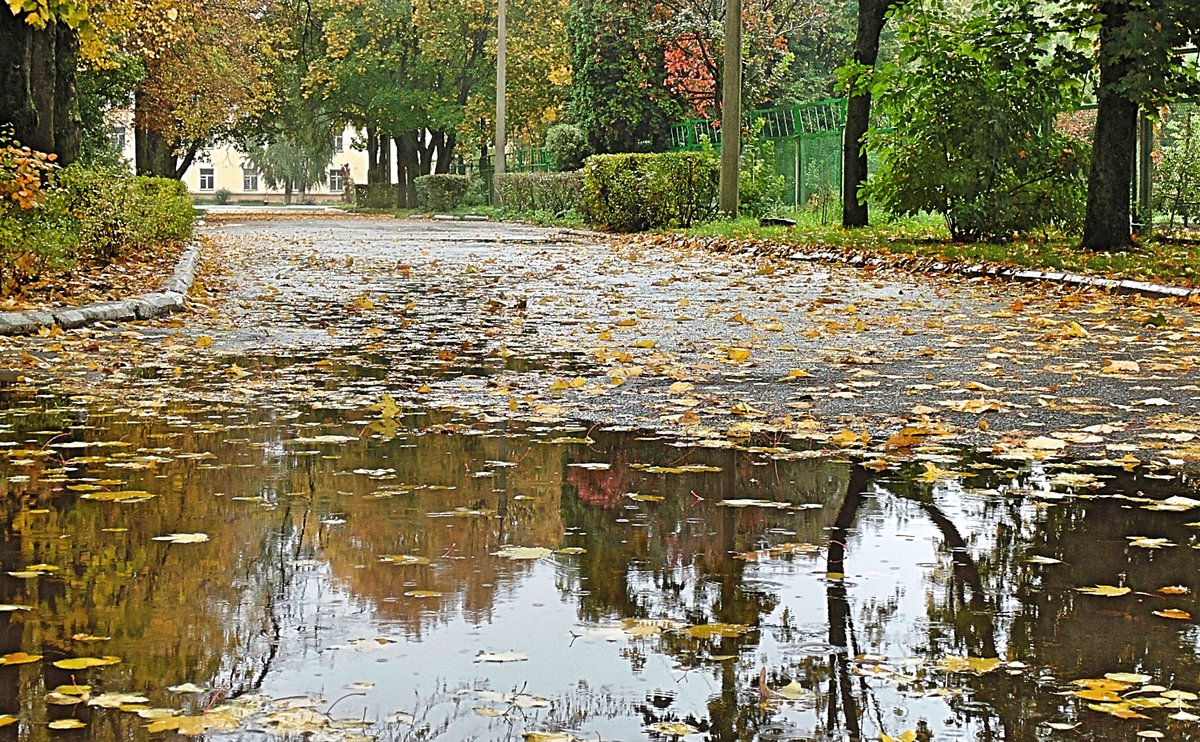 картинка дождя в парке народе