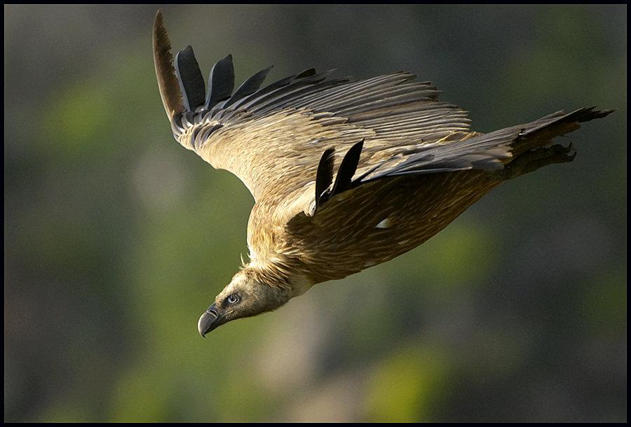 птицы в горах крыма этого симон пробовал