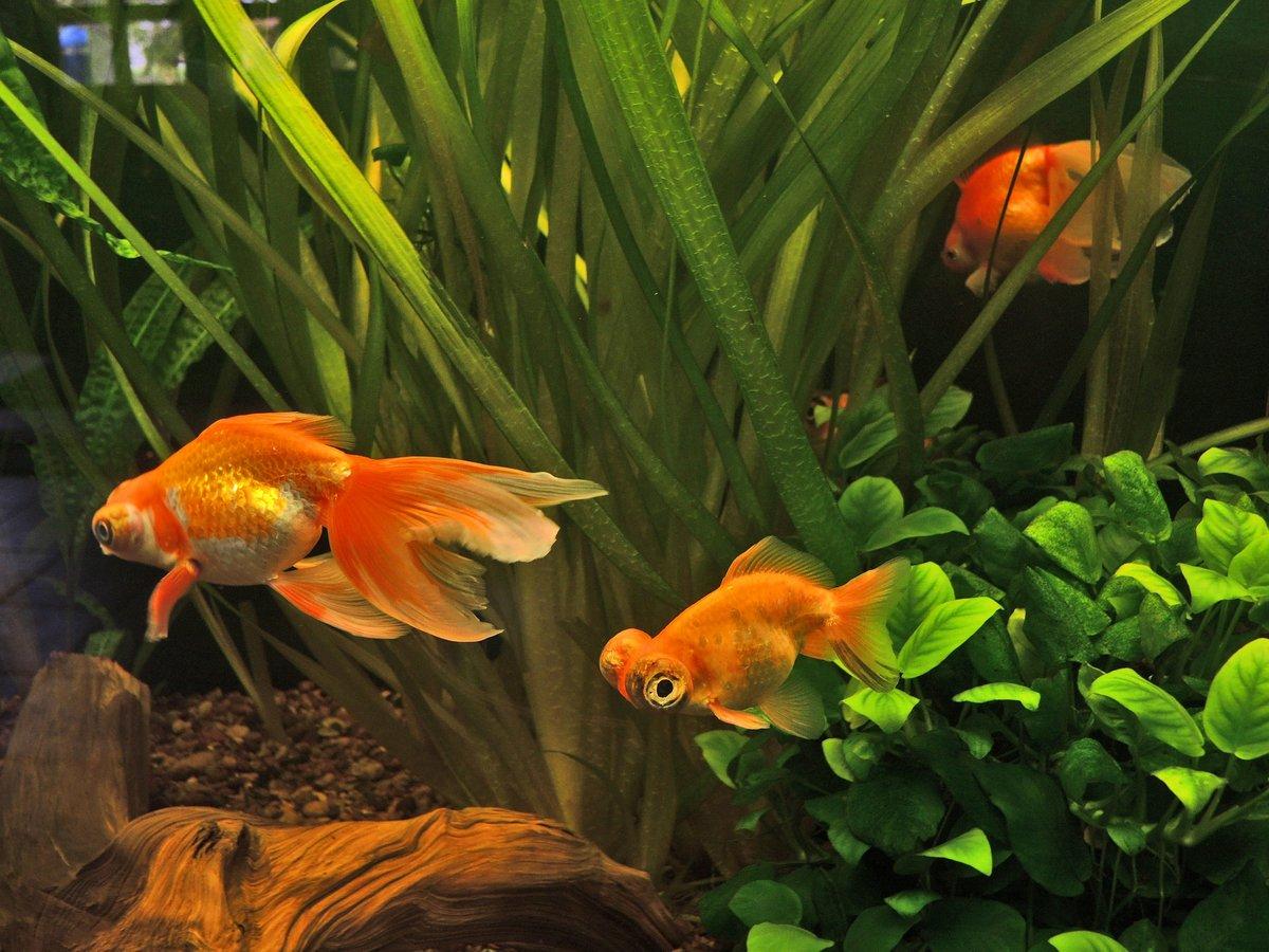 августе цветы картинки с рыбками рассказал одноклассникам, что