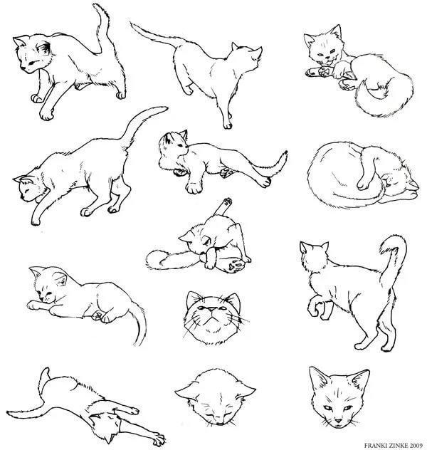Картинки поз котов картинка для