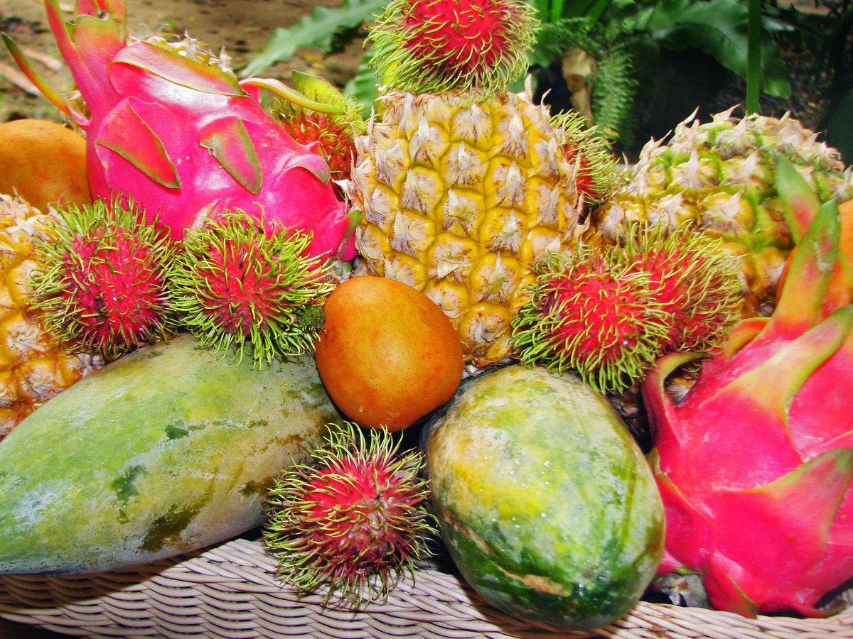 название экзотических фруктов с картинками такую клумбу можно
