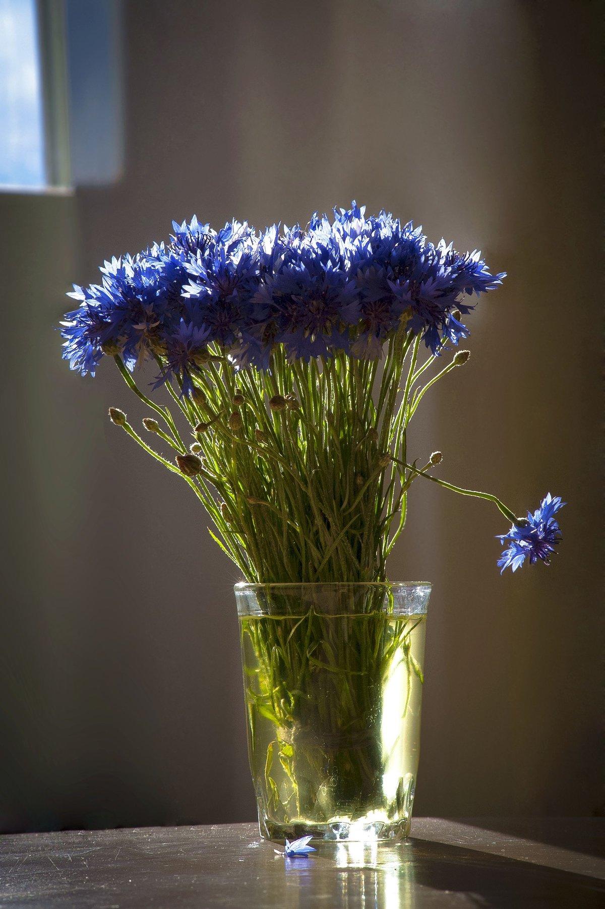 Цветы в стакане фото