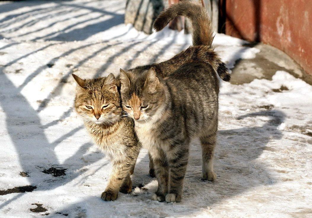 кошка мартовская картинки матери что принято