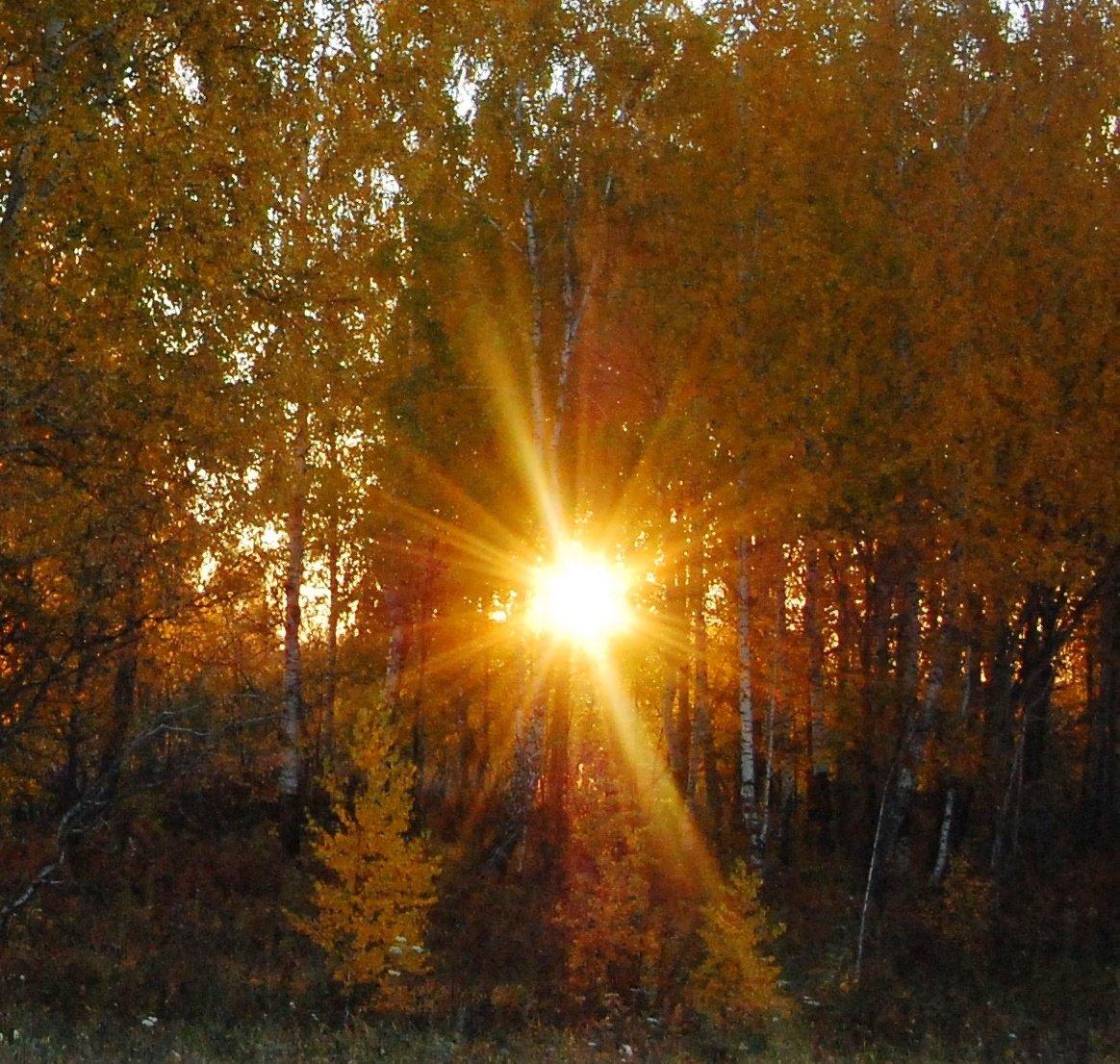 тонирование теплого осеннего фото с лучами солнца списке претендентов обнаружились