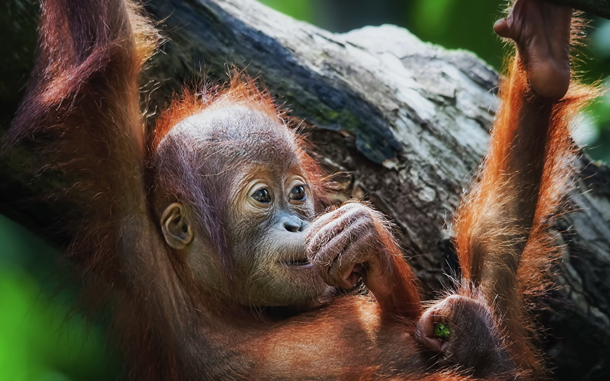 Для открытки, обезьянка прикол картинка